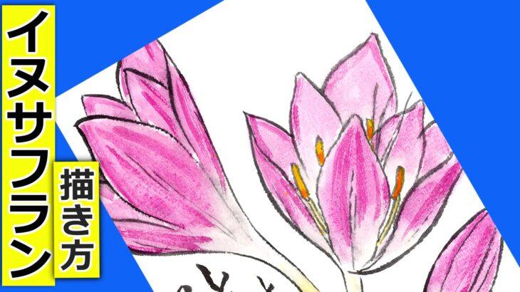 イヌサフランの花の描き方🌷無料動画│ガーデニングの絵手紙スケッチ│9月・10月・11月・12月│秋の花【コルチカム】