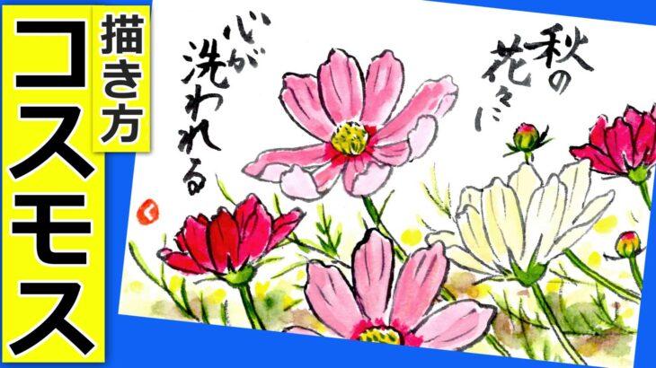 コスモスの花の描き方3 無料動画│ガーデニングの絵手紙スケッチ│9月・10月・11月・秋の花の描き方【秋桜】