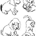 犬の絵を練習してみる
