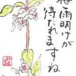 屁糞蔓(へくそかずら)、灸花(やいとばな)の絵手紙