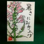 花虎の尾の絵手紙