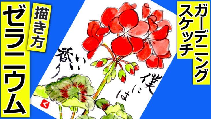ゼラニウムの花の描き方 無料動画│四季咲きガーデニングの絵手紙スケッチ│春・夏・秋│4月・5月・6月・7月・9月・10月・11月