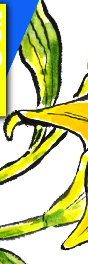 百合の描き方2 無料動画│初夏の花│6月・7月・8月の初夏の絵手紙【スカシユリ】