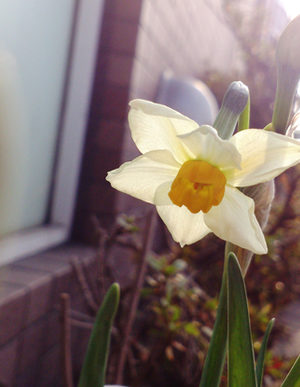 冬から春への絵手紙