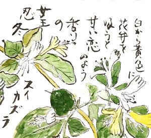 【忍冬】亀戸天神、羽衣ジャスミン、突抜忍冬【絵手紙】