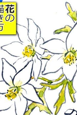 クレマチスの描き方 無料動画│鉄線│花の描き方│4月・5月・春の絵手紙【カートマニージョー】
