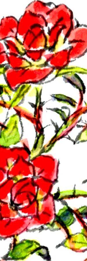 ミニバラの描き方 無料動画│ガーデニングの絵手紙スケッチ│初心者│4月・5月・6月・7月・8月・9月・10月・11月・春・夏・秋【ミニ薔薇】