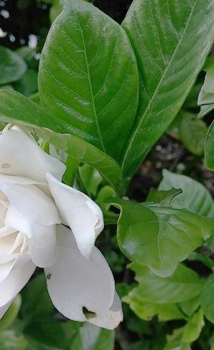 初夏の花々の絵手紙