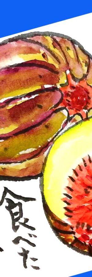 イチジクの描き方│ガーデニングの絵手紙スケッチ│初心者│8月・9月・10月・夏・初秋【無花果】