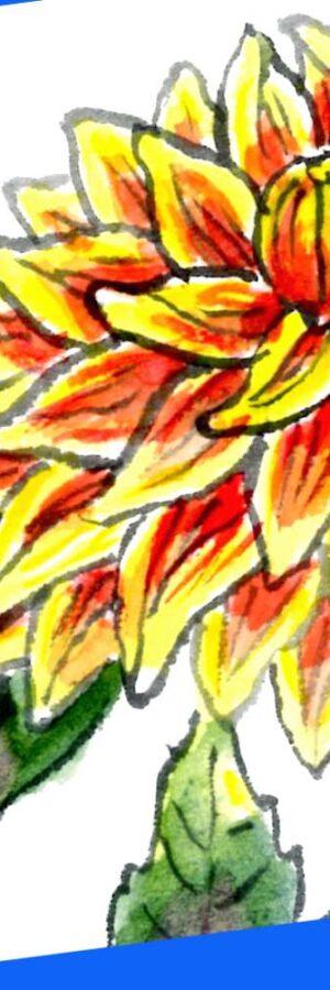 ダリアの花の描き方2🌼無料動画|ガーデニングの絵手紙イラスト│6月・7月・8月・9月・10月・11月・夏・秋の花