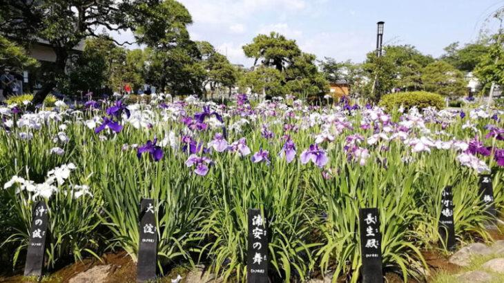 【堀切菖蒲園】開花情報・アクセス・営業時間・料金【見頃です】