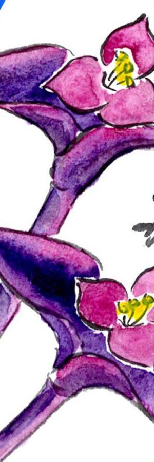 紫御殿(ムラサキゴテン)の描き方 無料動画│ガーデニングの絵手紙スケッチ│通年テーマ│花期は4月~10月・春・夏・秋