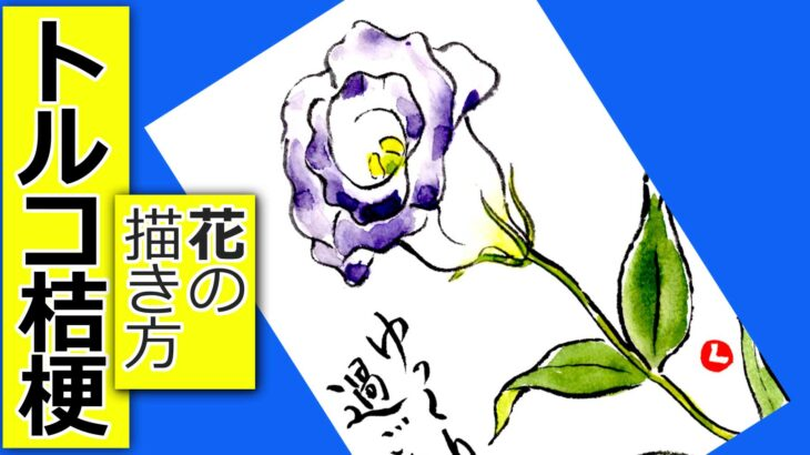 トルコ桔梗の描き方 無料動画│初夏・秋の花の描き方│5月・6月・7月・9月・10月の絵手紙イラスト