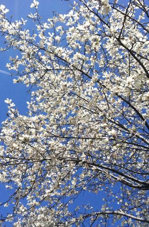 春の絵手紙(2013年絵手紙作品画像)
