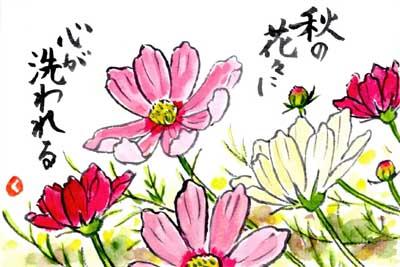 まとめ│コスモスの絵手紙作品画像 22点│秋の花の絵手紙イラスト【秋桜】