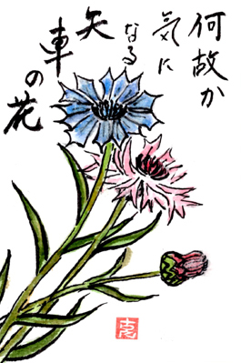 初夏の絵手紙たち(Kさん)