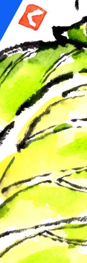 キャベツの簡単な描き方 無料動画│野菜の絵手紙イラスト│11月・12月・1月・2月・3月・4月・5月・6月│春キャベツ・冬キャベツ【初心者】
