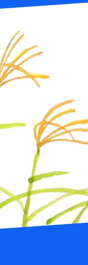 ススキの簡単な描き方🎑無料動画│秋の七草│お月見│初心者│花の絵手紙イラスト│9月・初秋