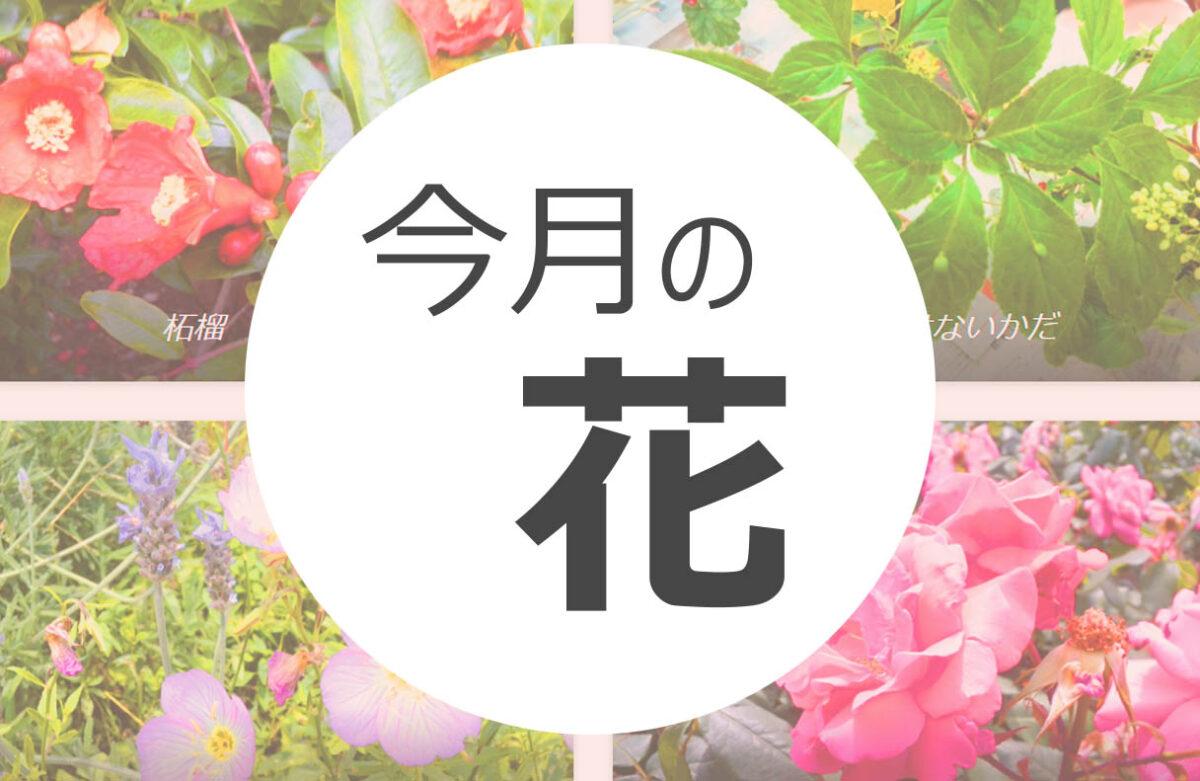 今月の花 まとめ