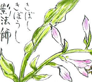 【絵手紙】擬宝珠、枝豆、段菊、葉しょうが、百合、紅花【夏】